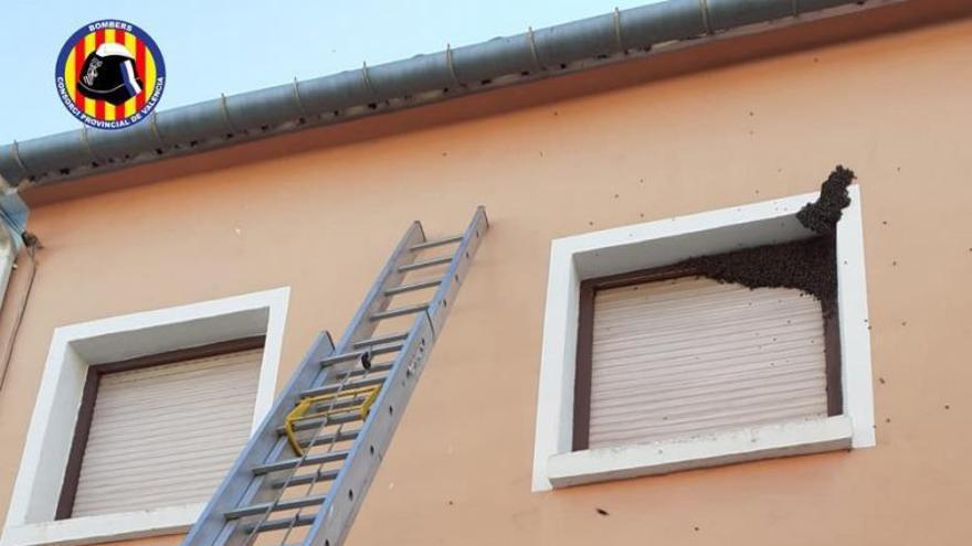 Los nuevos enjambres de abejas se asientan en las tres comarcas