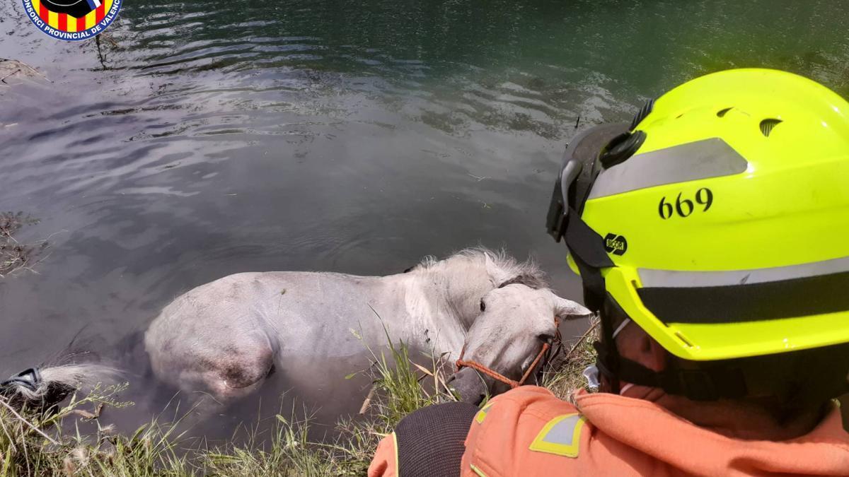 Rescatan un caballo que había caído a la marjal de Oliva
