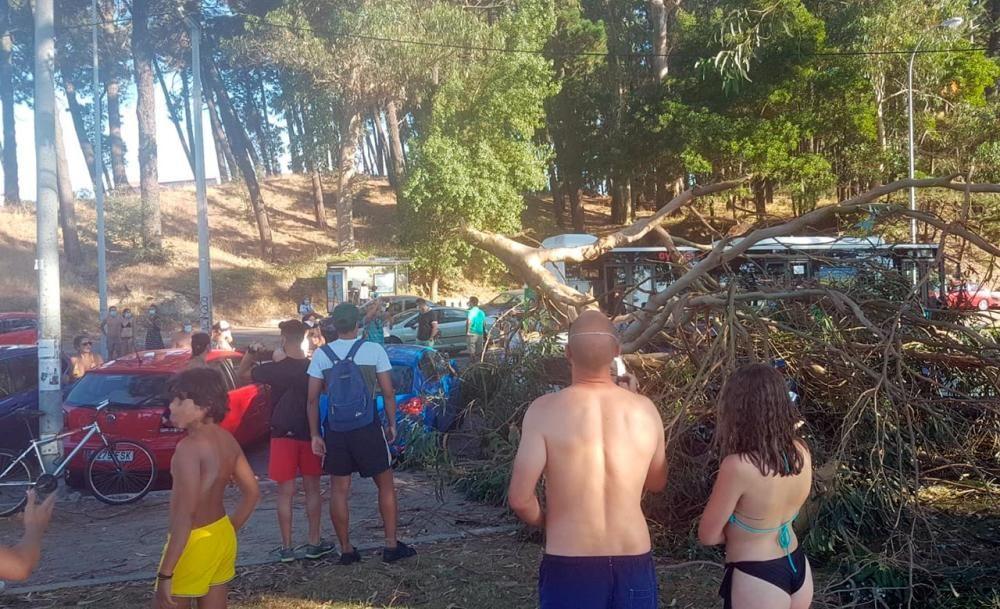 La rama caída en Samil sobre los vehículos aparcados