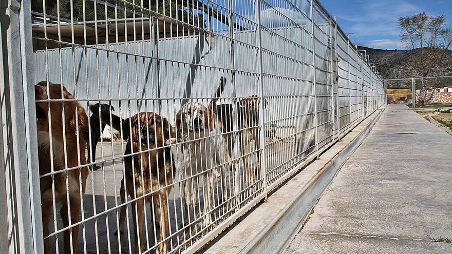 El refugio de animales va a Tavernes al no ceder  suelo ningún alcalde en la Ribera