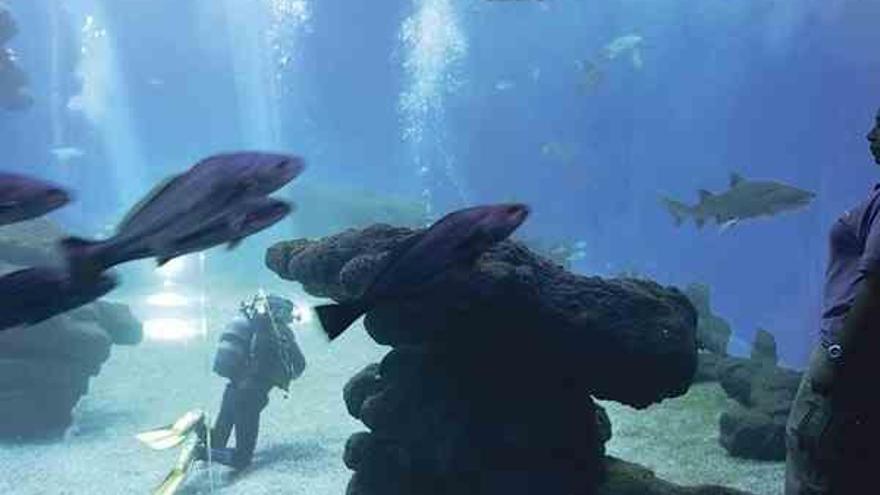 Tauchunfall im Palma Aquarium: Besucherin schwer verletzt