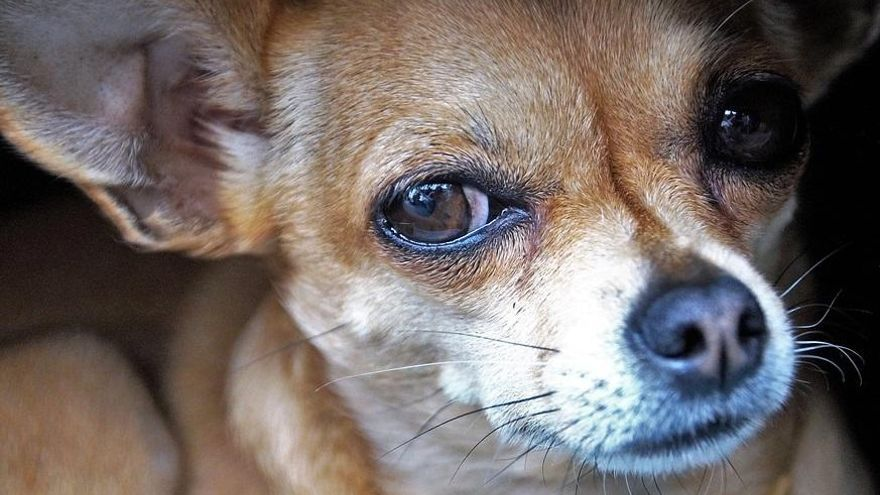 Once meses de maltrato y uno de protección animal