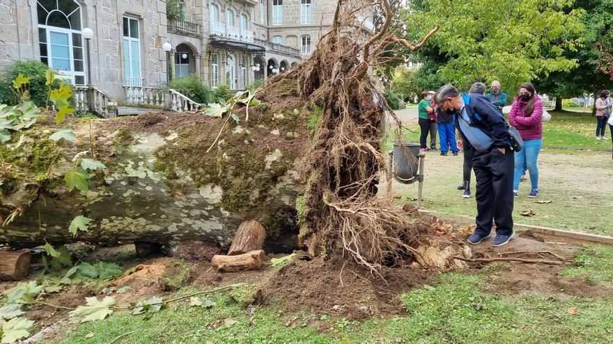 Mondariz-Balneario crea una comisión de investigación sobre el derrumbe mortal del árbol