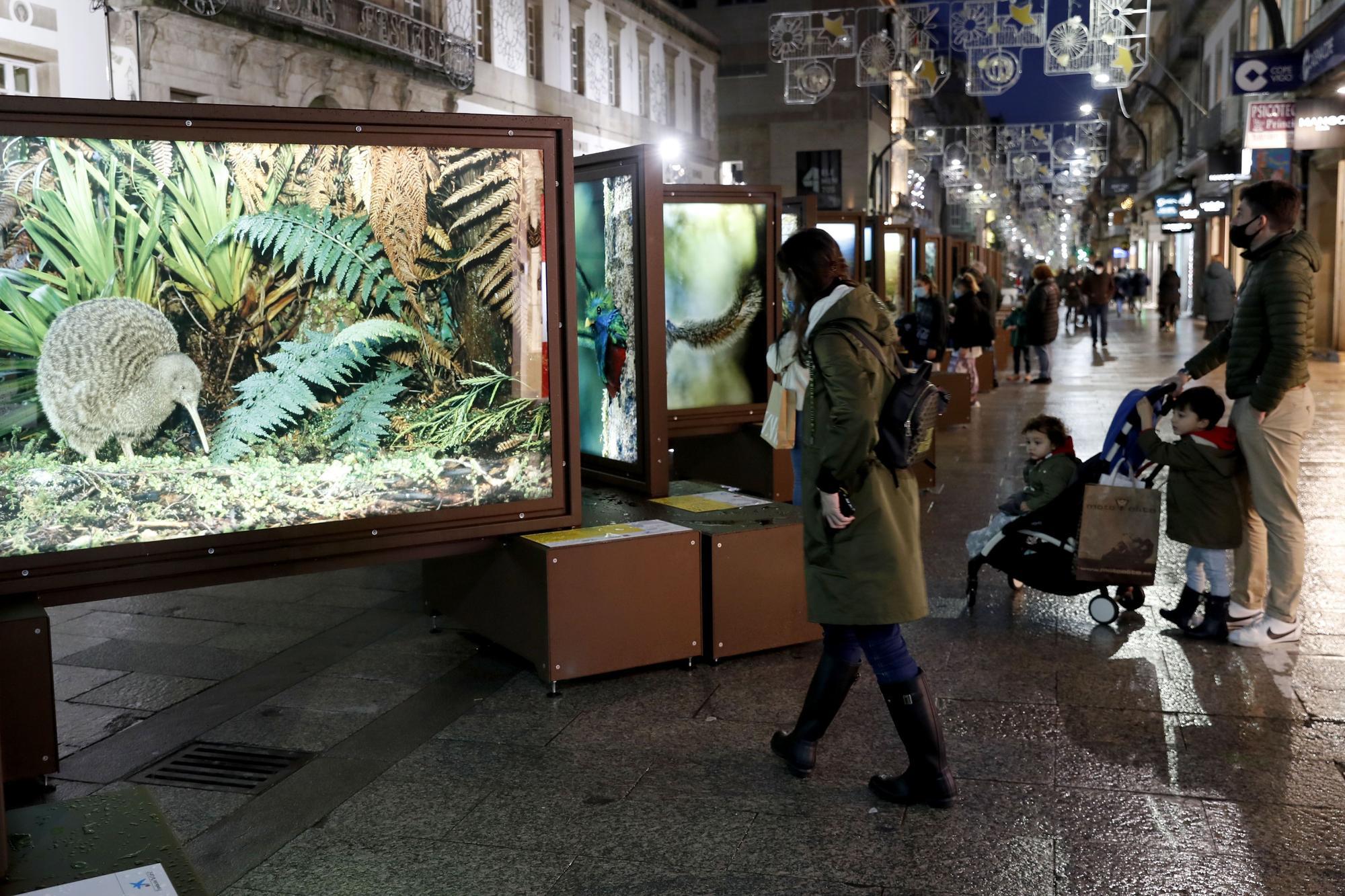 La naturaleza de National Geographic a pie de calle en Vigo
