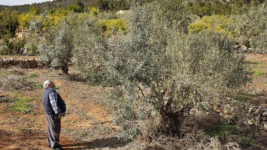 El secano pierde terreno: las tres comarcas arrancan 475 hectáreas de cultivo en 2020