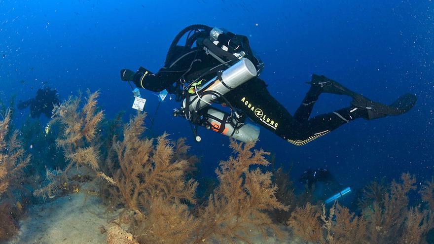 Lanzarote inicia la investigación sobre los bosques submarinos de coral negro