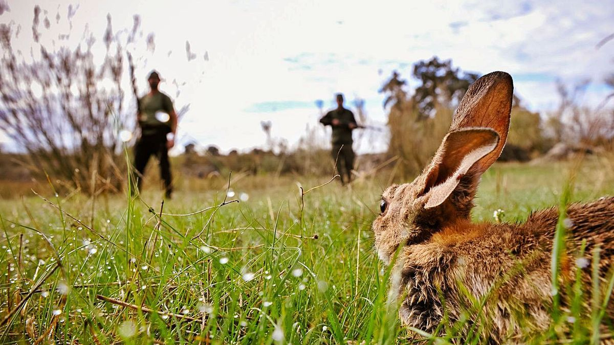 Dos cazadores, durante una jornada de cacería del conejo.   RAFA SÁNCHEZ