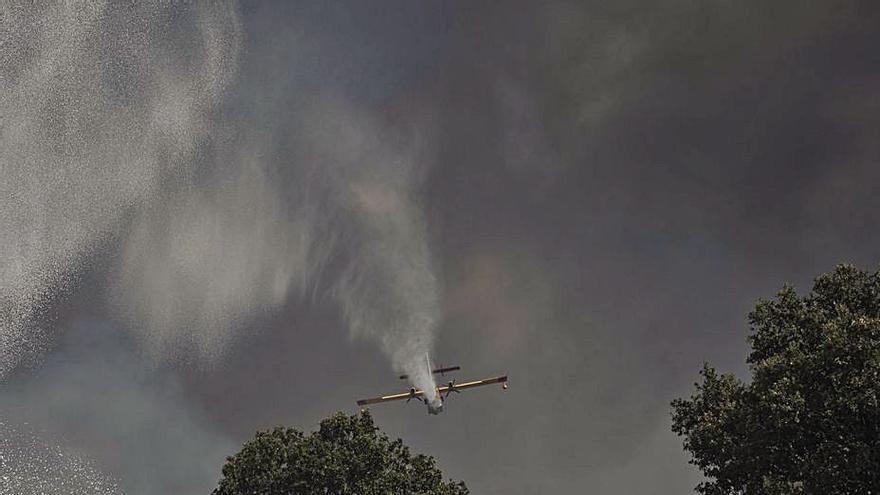 La madera quemada en el fuego de Domez se retira para evitar plagas
