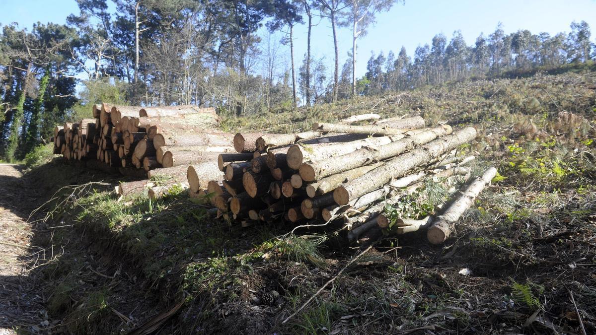 Tala de madera en la fraga de Sisalde