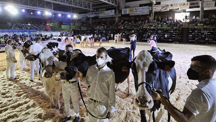 Las ganaderías Rey de Miñotelo, de A Pastoriza, y la rodeirense Rato triunfan en Feiradeza