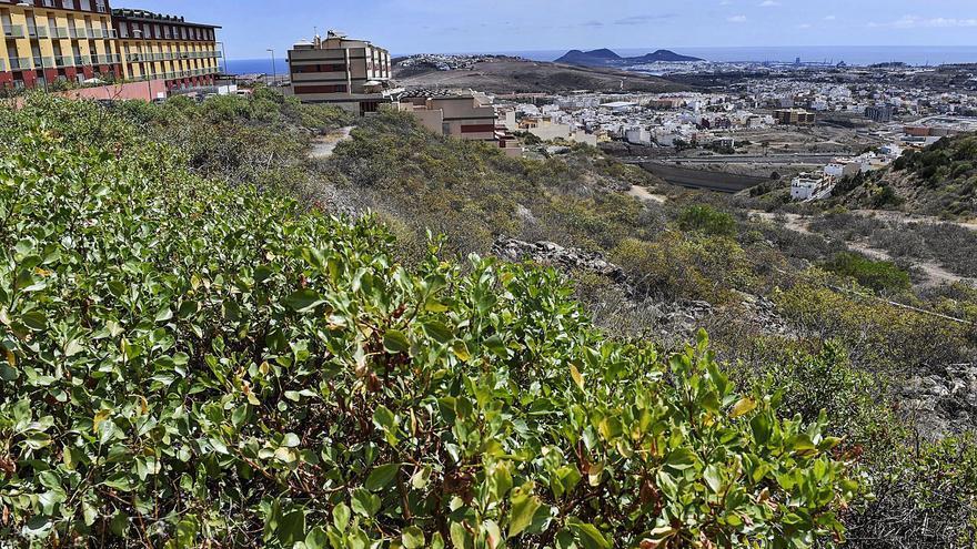 Ciudad del Campo logra un mirador con los Presupuestos Participativos 2020