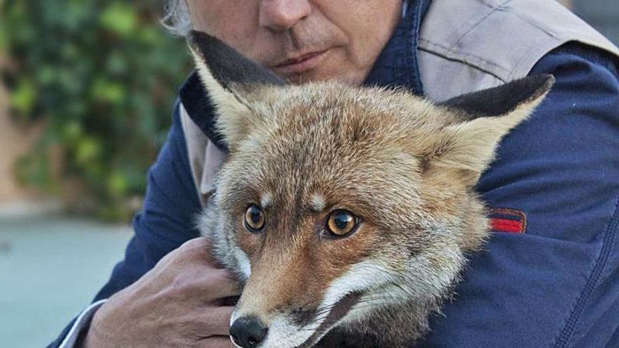 45 millones de animales mueren de miedo al año