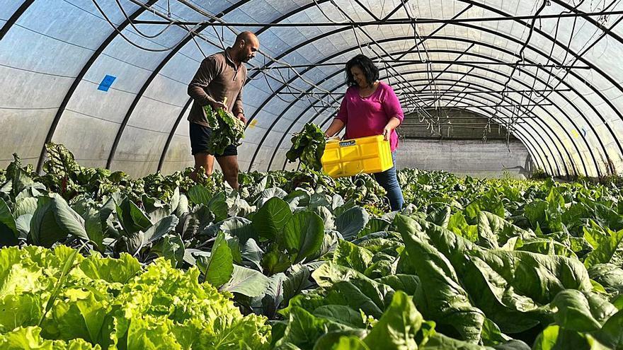 """Caleya"", programa de alimentos ecológicos para personas sin recursos"