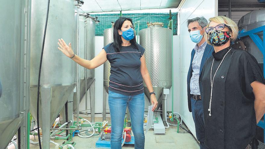 Dos empresas estudian producir en las Islas biocombustible a gran escala
