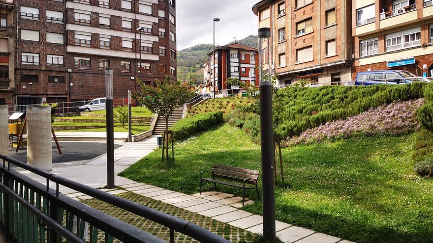 La avispa asiática se muda al centro: en Lena aparecen en los jardines del Ayuntamiento