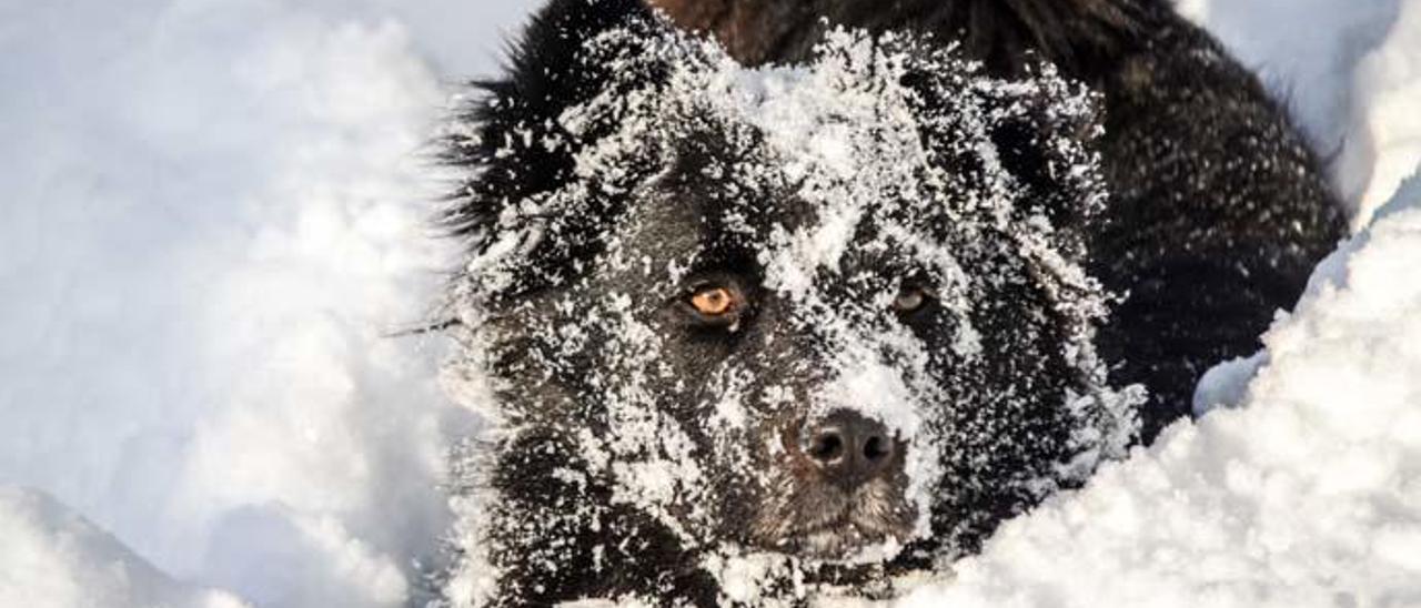 Consejos para cuidar de las mascotas durante el frío