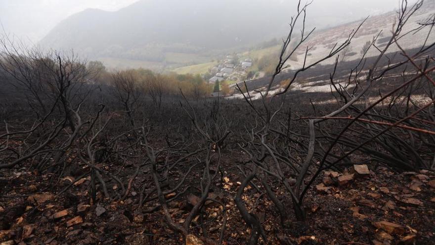 La Fiscalía pide información al Seprona y al SEPA sobre los incendios en el Suroccidente