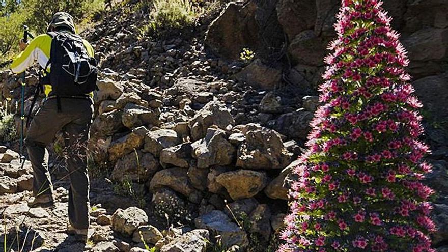 Un senderista por el Parque Nacional del Teide, en una edición anterior.