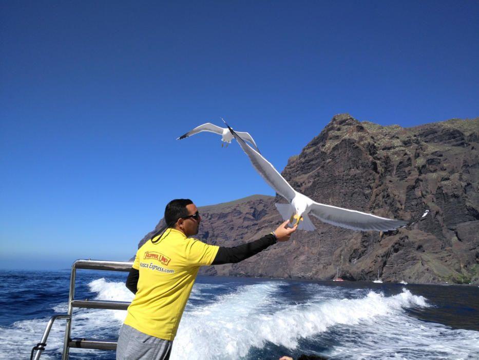 Gavines. En aquesta fotografia que ens ha fet arribar un dels nostres lectors es contempla com el mariner del vaixell xiula i les gavines volen a buscar el menjar de la seva mà.