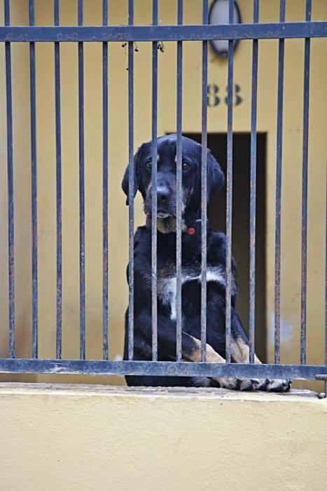 In Son Reus kommen derzeit kaum Hunde oder Katzen an. Knapp die Hälfte der Zwinger steht leer.