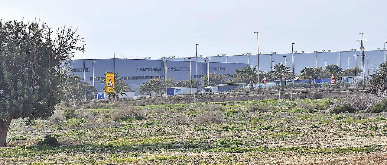 Terrenos destinados a la ampliación del Elche Parque Empresarial, en Torrellano. | MATÍAS SEGARRA