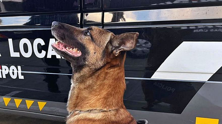 Los guías caninos realizan 80 actas por tenencia de drogas en agosto