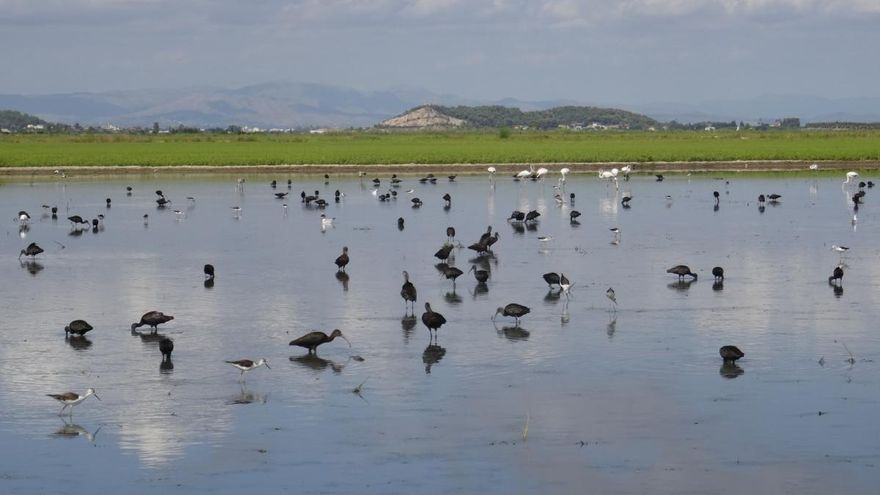 De arrozal fallido a hábitat de las aves