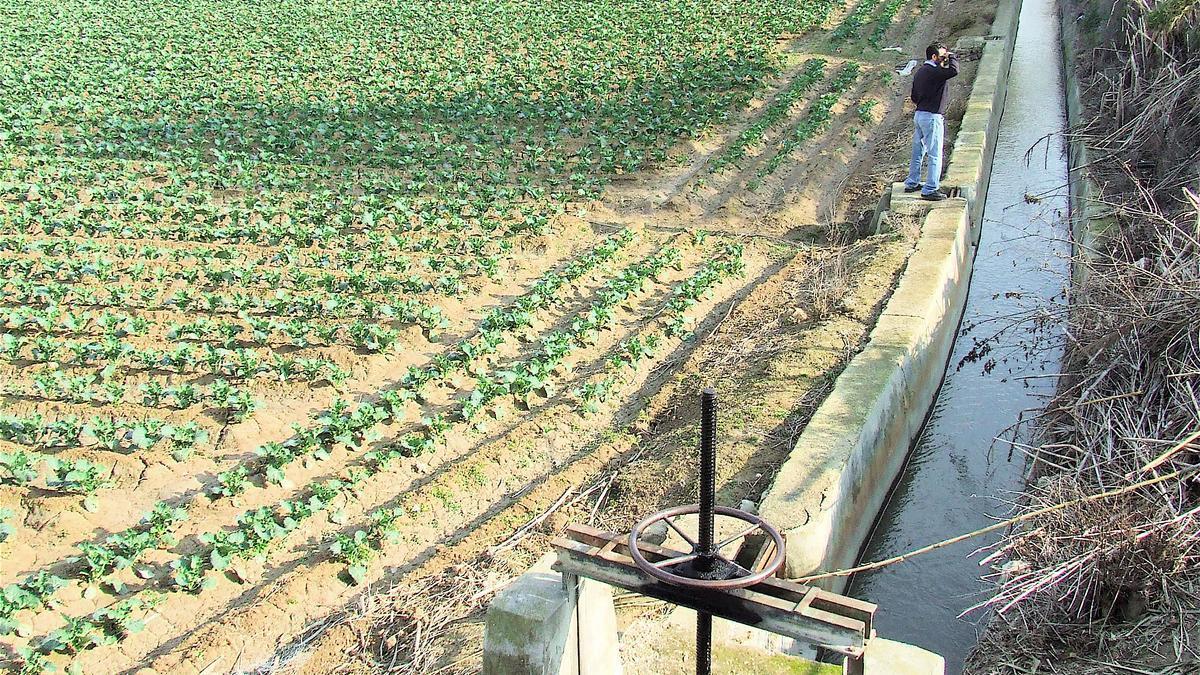 Traditional vegetable garden of the Vega Baja
