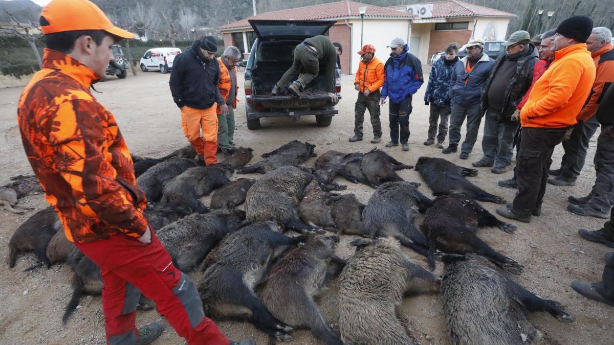Caçadors caçats