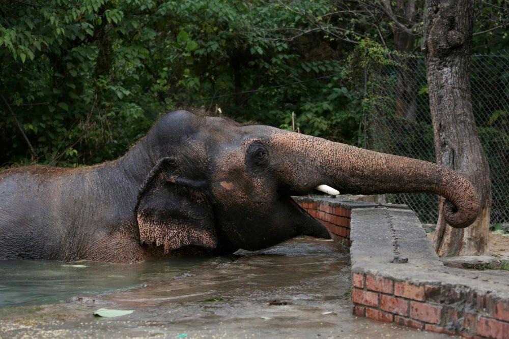 Elefante en Camboya.