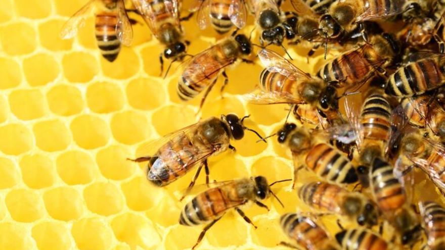 78 españoles murieron entre 1999 y 2018 por picaduras de abejas y avispas