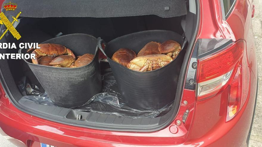 Más de 70 kilos de marisco, intervenidos en un operativo contra el furtivismo en Oleiros