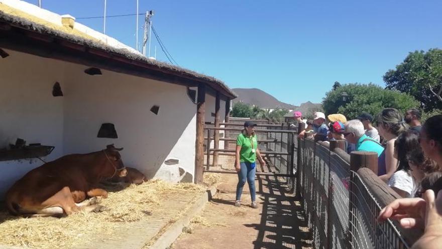 El centro ecológico y cultura Los Olivos  reabre sus instalaciones los domingos