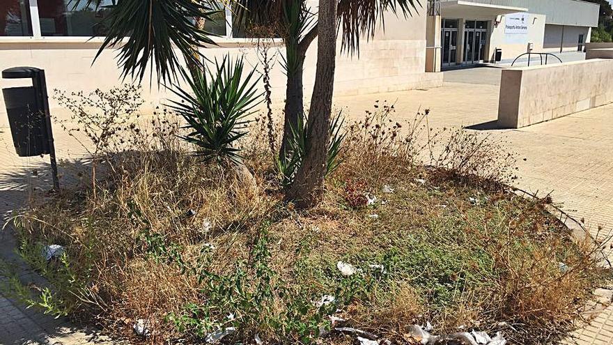Hierbas altas y basura frente  al polideportivo Antoni Servera