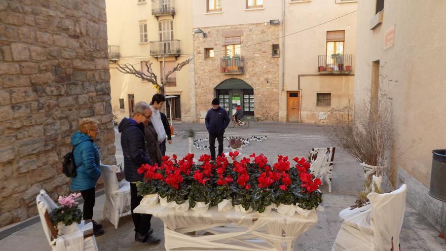Santpedor en Flor manté els balcons florits i les passejades entre flors