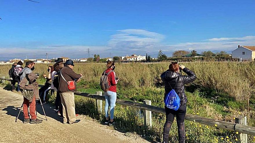 Caixes niu en el paratges de l'Horta i en Sinarcas