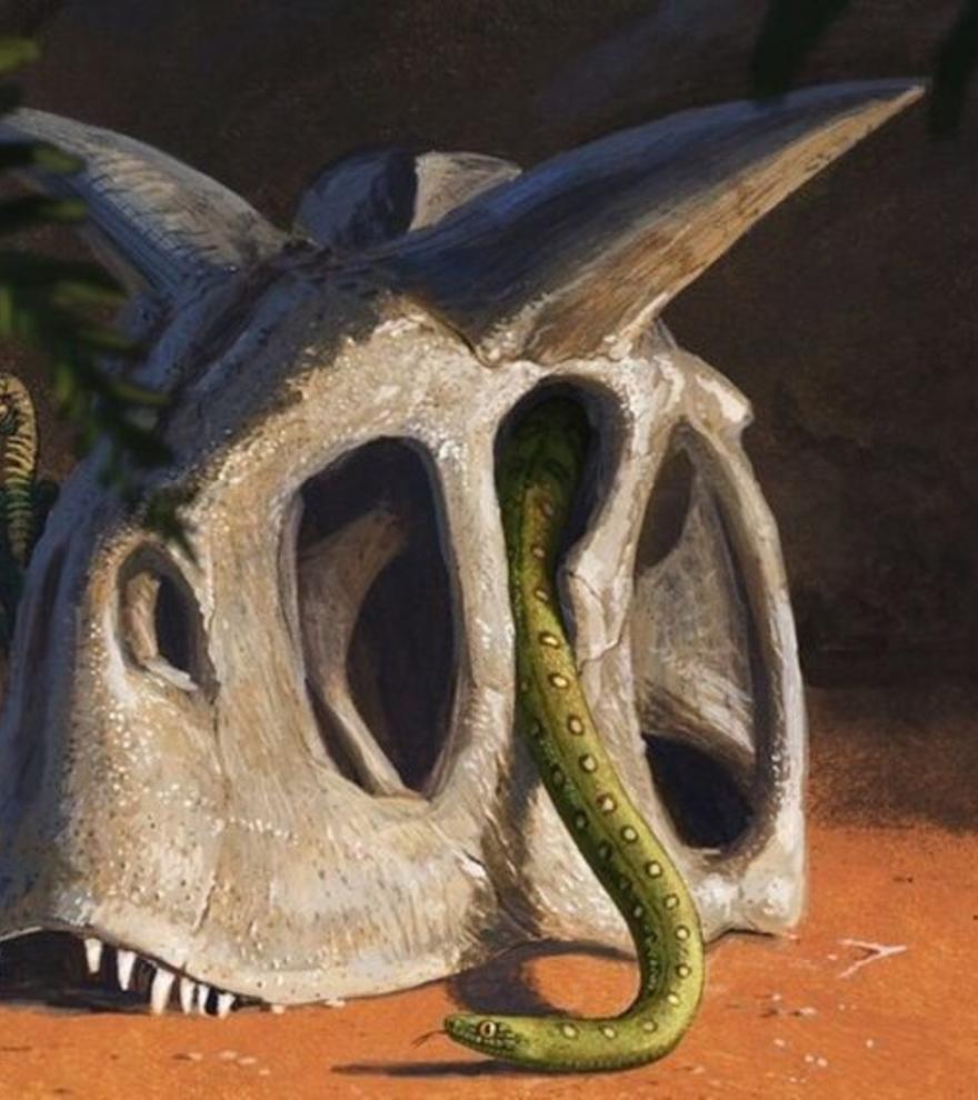 Las serpientes evolucionaron gracias a la desaparición de los dinosaurios