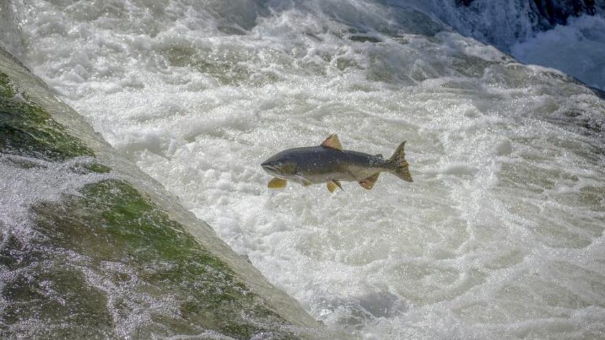 Los peces de agua dulce, en peligro: en 2020 se extinguieron 16 especies
