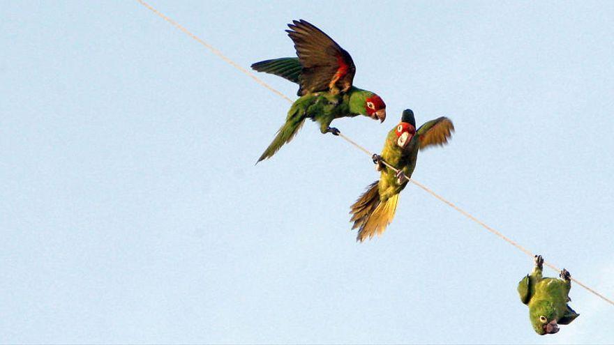 Canarias desarrollará un estudio de patógenos en aves migratorias y especies exóticas