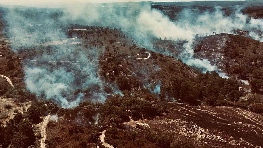 Els incendis ja han afectat més hectàrees que en tot el 2020