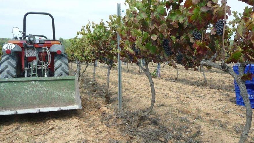 Celler L'Alter de Benimaquia: la recuperación y modernización de viñas tradicionales
