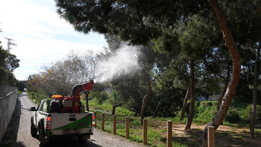 Actuación preventiva en Paiporta contra la procesionaria del pino