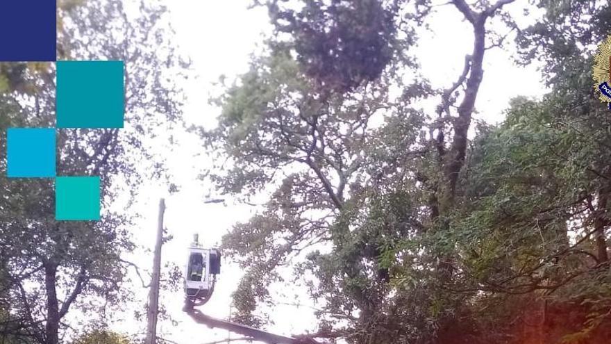 La caída de un árbol corta un camino y causa daños en el alumbrado en Poio