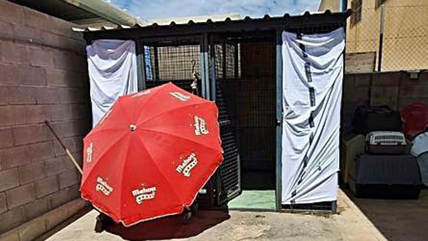 Compromís reclama mejores condiciones en la perrera de  Santa Pola