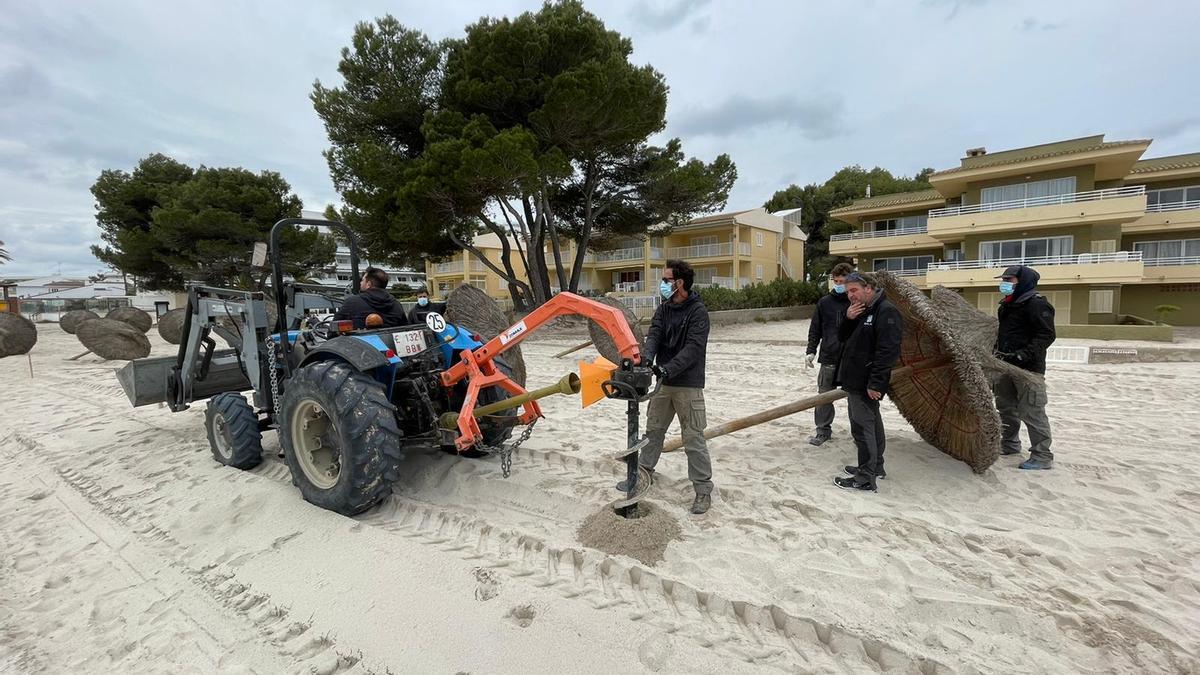 Operarios de Emsa trabajan en la playa principal del puerto de Alcúdia.