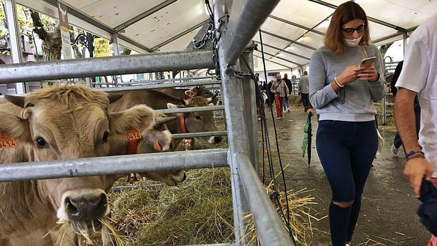 Berga manté Santa Tecla per la necessitat del sector agroalimentari