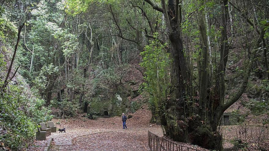 El exceso de visitantes pone en riesgo el bosque de Agua García
