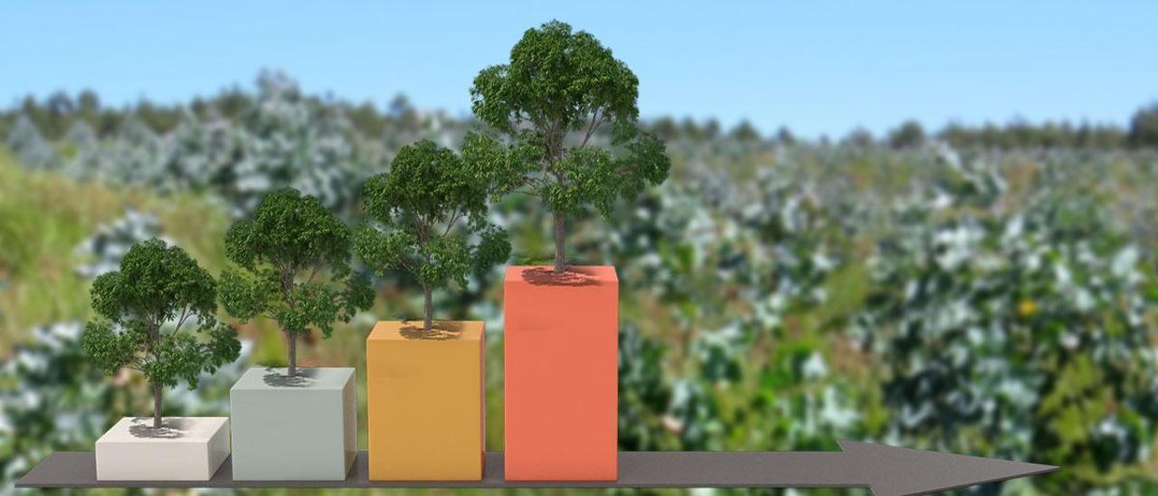 Crecen las sanciones por plantaciones ilegales de eucalipto