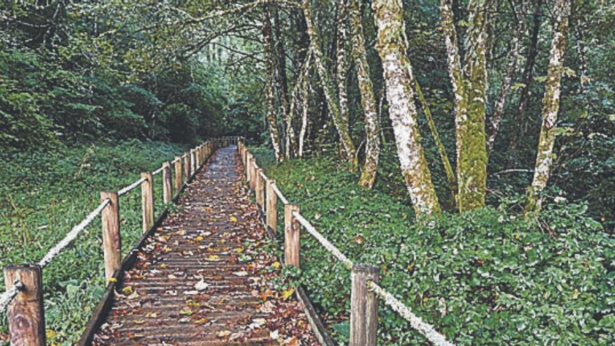 Fagedes i rouredes, en busca del bosc encantat