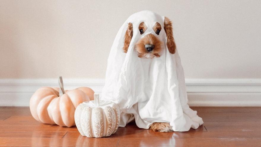 Ideas originales para disfrazar a tu mascota en la noche más terrorífica del año